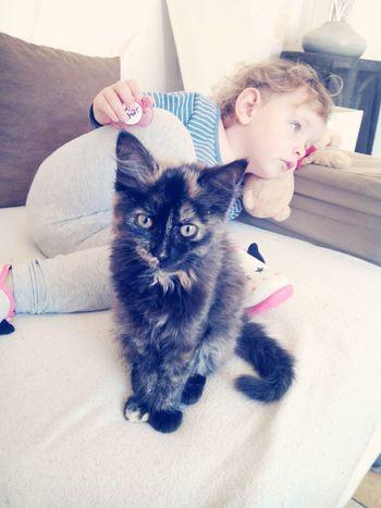 Cat Cute Pets Child Hood