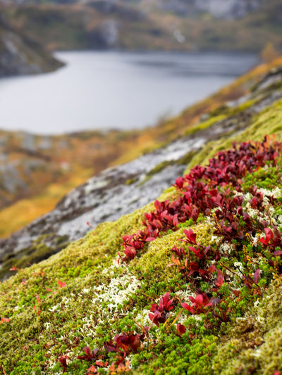 Beauty In Nature Close-up Day Flower Focus On Foreground Freshness Grass Lake Landscape Mountain Nature No People Outdoors Red Flower Red Flowers Relaxing Scenics Sky Tranquility Water Yellow