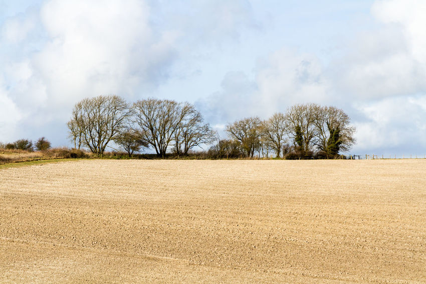 Sussex Farm Landscape Agriculture Bare Tree Beauty In Nature Cloud - Sky Day Farmland Field Growth Horizontal Landscape Nature No People Outdoors Ploughed Plowed Sky Sussex Tranquility Tree
