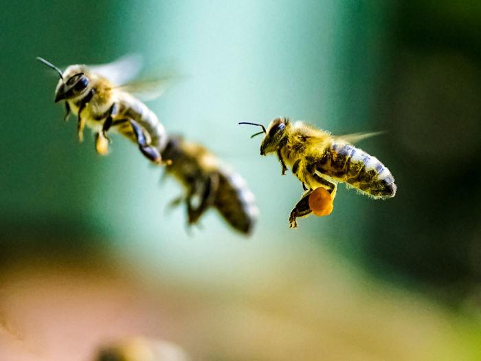 Close-Up Of Bees Buzzing At Park