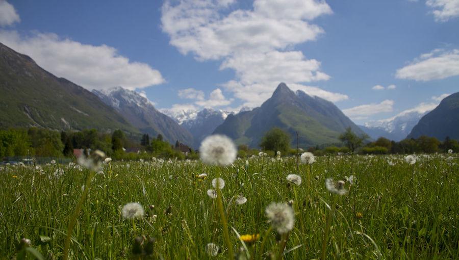Beauty In Nature Bovec Field Grass Landscape Mountain Mountain Range Sky Slovenia