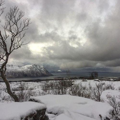 Winter Snow Nature Cloud - Sky Norway Lofoten No Filter Shades Of Winter