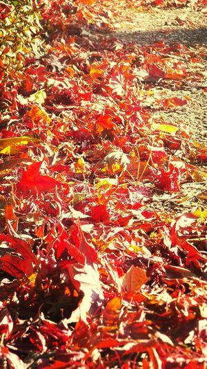 팔달산에서 가을에 추억을 남기고~