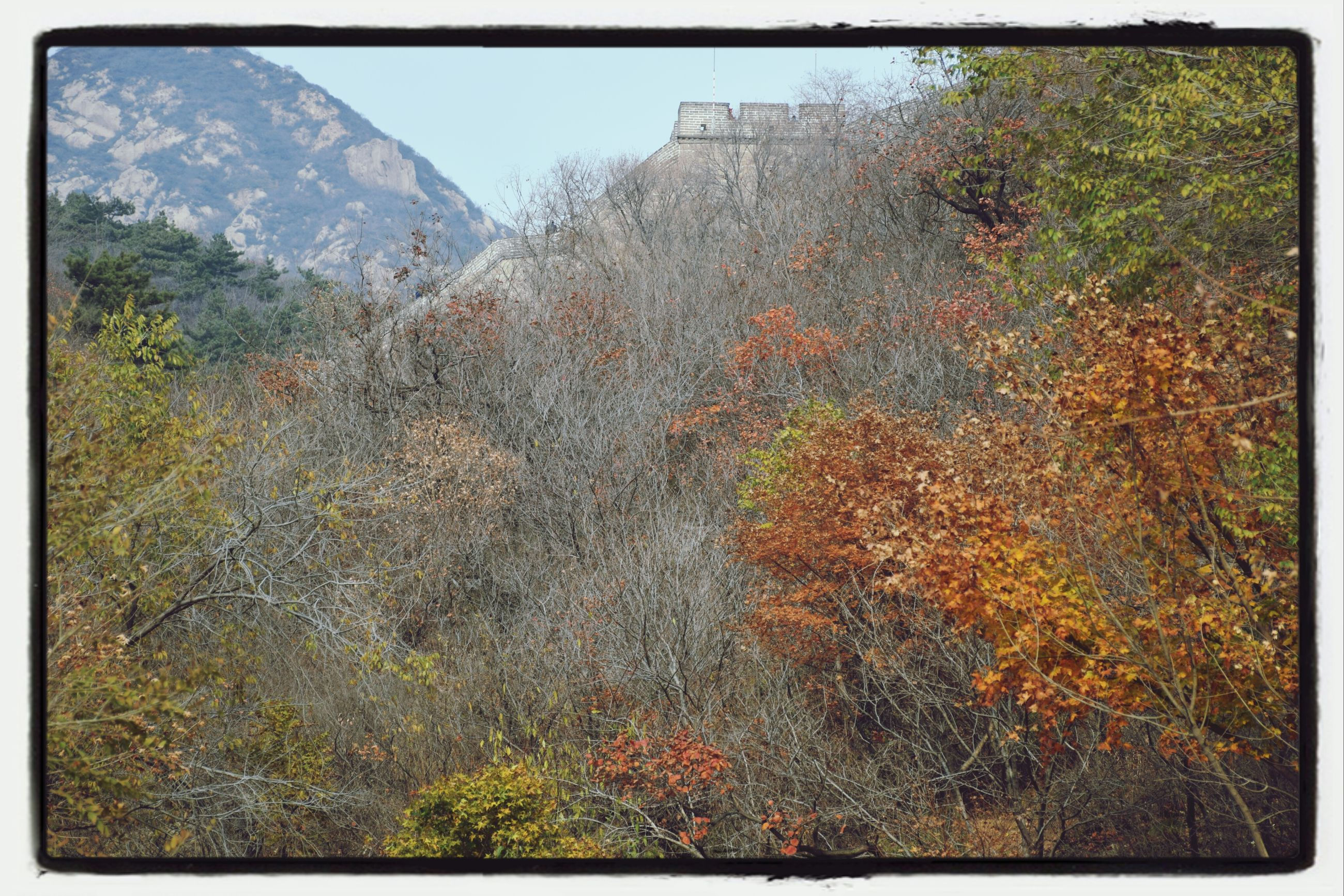 transfer print, auto post production filter, tranquility, tree, beauty in nature, nature, mountain, tranquil scene, growth, scenics, plant, non-urban scene, rock - object, day, high angle view, outdoors, no people, season, landscape, idyllic