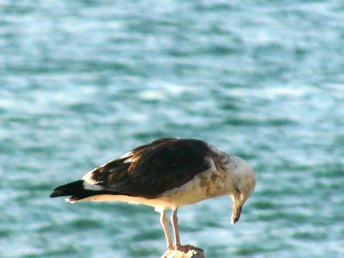 Bird against blurred background