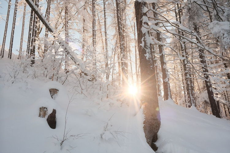 Snow covered land and trees against bright sun