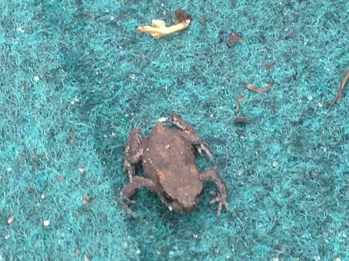frog Taking Photos van 2 centimeter