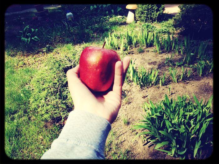 ?Apple First Eyeem Photo