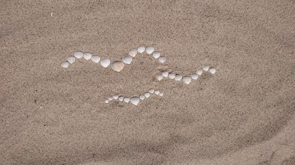 Möwen Möwen Portrait Muscheln Weiße Muscheln Sommer Sonne Sonnenschein ❤ Sommergefühle Summerfeeling Summertime Sandstrand Ostseestrand Ostseefeeling Ostsee! Kühlungsborn, Germany Kühlungsborn Kühlungsborn ❤️ Ostseebad Kühlungsborn Ostseebad Sandy Beach Sand And Sea Beachphotography Ink Backgrounds Painted Image Textured  Full Frame Sand Abstract Pattern Beach Dirty #FREIHEITBERLIN