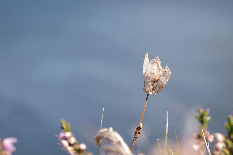 Dry flower in