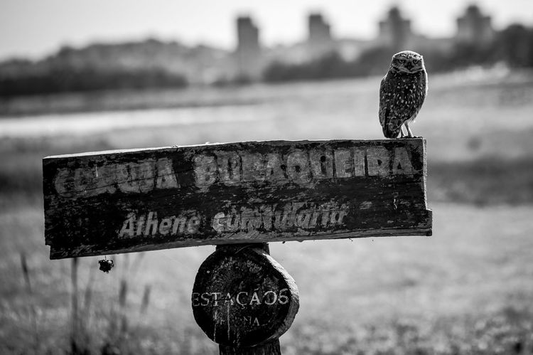 Nature Vibes | Owl Blackandwhite Owl Photography Owl Focus On Foreground Communication Day Nature Text No People Close-up Information Bird Animal Animal Themes Outdoors Sign