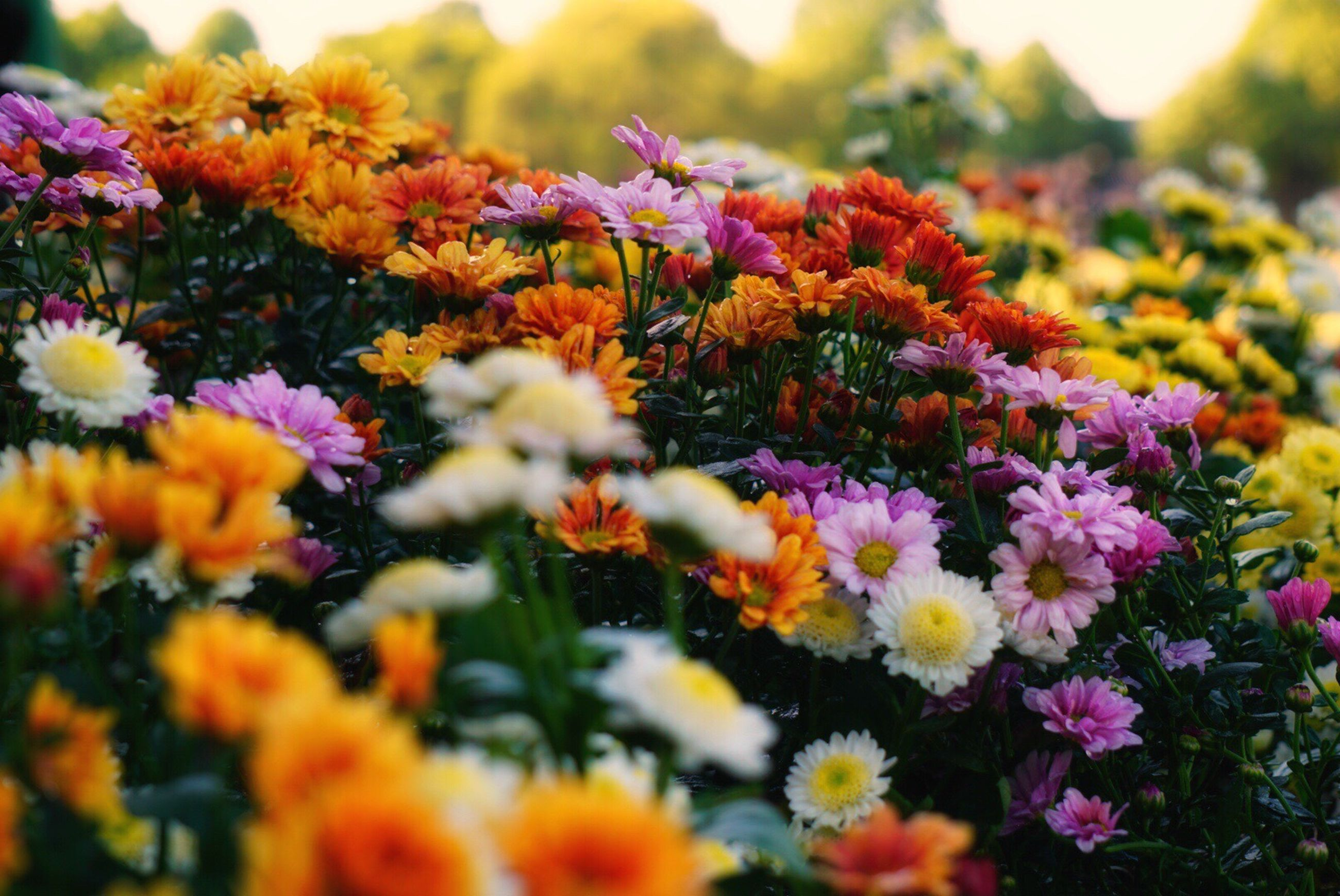 flower, growth, nature, beauty in nature, fragility, plant, freshness, no people, day, outdoors, blooming, close-up, flower head