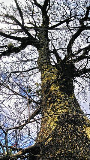 """Tree Tree And Sky Green GREEN IS GOOD Enjoying Nature Breathing Nature Beautiful Nature Natural Beauty Life """"El problema fue que te enamoraste de mis hojas no de mis raíces y cuando llegó el otoño no supiste que hacer..."""""""