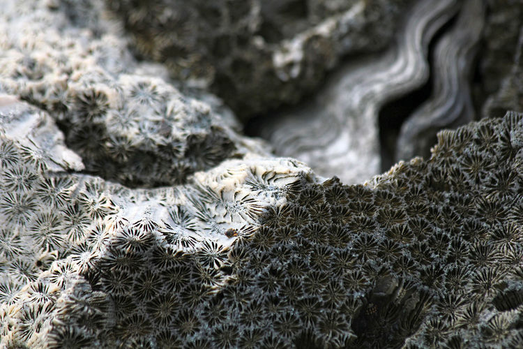 Full frame shot of coral