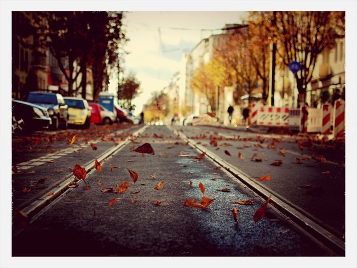 Welches ist besser? Colors Of Autumn in the Kastanienallee Streetphotography .