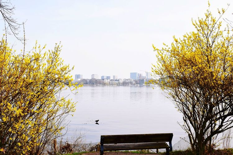 Nature Forsythienblüten Forsythia Blooms Water Waterfront One Bird Buildings Buildings & Sky Buildings Architecture Bench Seat Bench In Nature Beauty In Nature Sunlight Sunshine ☀ Day Outdoors Focus On Foreground City Bird Urban Skyline Cityscape Tree Water Skyscraper Lake Sky Architecture