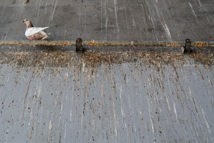 Low angle view of bird perching on rusty pipe