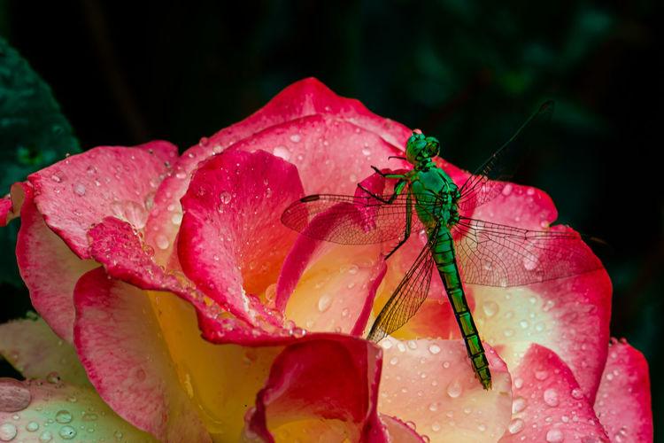 A iridescent