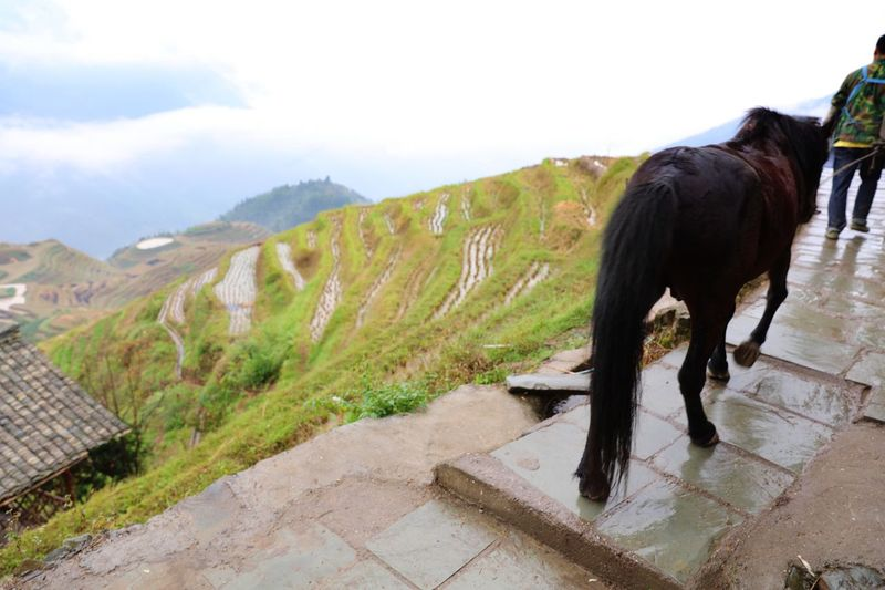 Rear View Of Man And Horse On Mountain Peak Against Sky