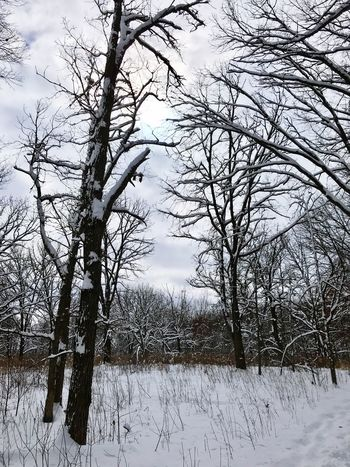 Snow Winter Cold Temperature Tree Bare Tree Nature Tranquil Scene Beauty In Nature Forest Landscape Scenics Tranquility Sky No People Outdoors Branch Frozen Polar Climate Day Rural Scene