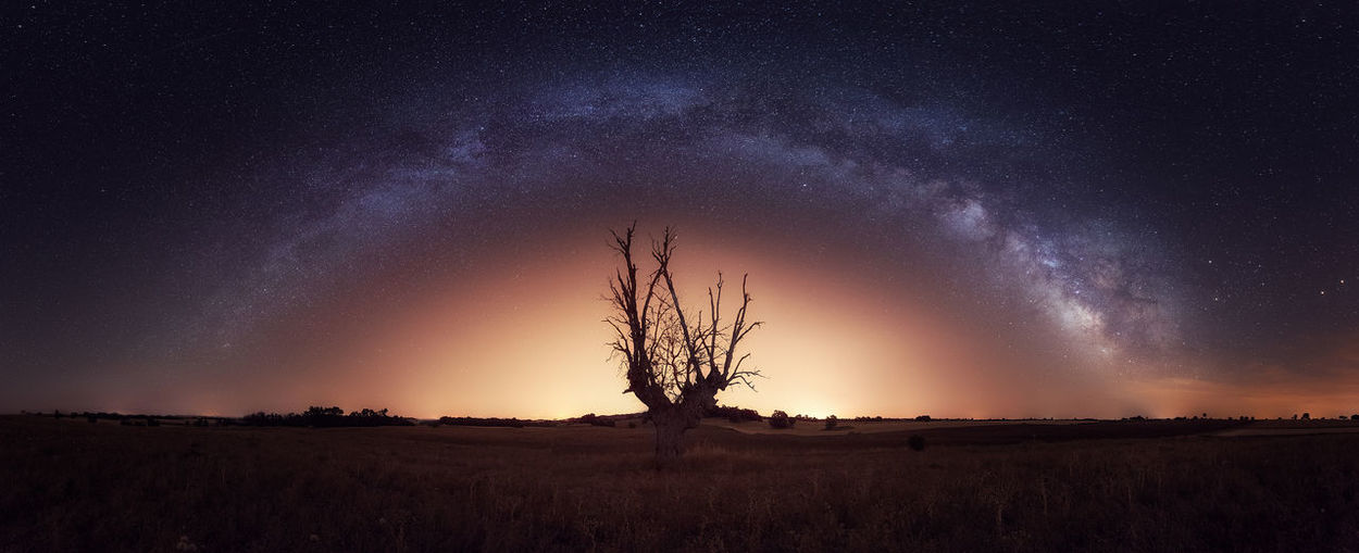 A lonely tree in Brihuega´s fields in Guadalajara Astronomy Bare Tree Beauty In Nature Field Galaxy Landscape Majestic Milky Way Nature No People Outdoors Panorama Scenics Star - Space The Great Outdoors - 2017 EyeEm Awards Tranquility Tree