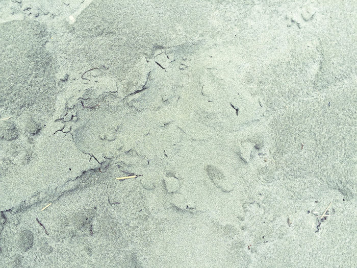 Animal Track Backgrounds Bay Of Plenty Region Beach Close-up Day Full Frame High Angle View Nature New Zealand No People Ohope Outdoors Paw Print Sand Textured