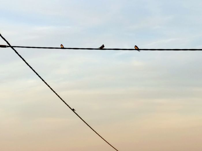 Kabel Himmel Swallow Schwalben Birds Vogel Sommer Summer Outdoors Cable Silhouette Sky Day No People Full Length