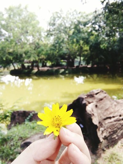 Flower Nature Beauty In Nature Outdoors Water Tree