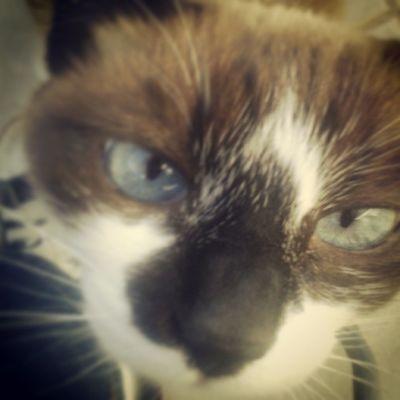 Espelho espelho meu, existe olho mais lindo que o meu? R: não Maia  Cat Eye Blueeye
