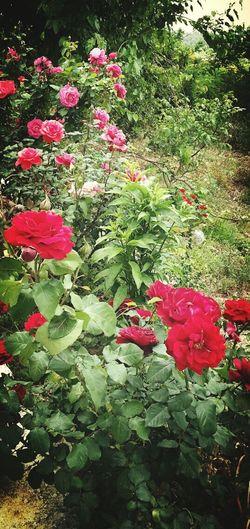 Gülü ölene kadar seni Solana kadar sevecegim 😂😂😂😂