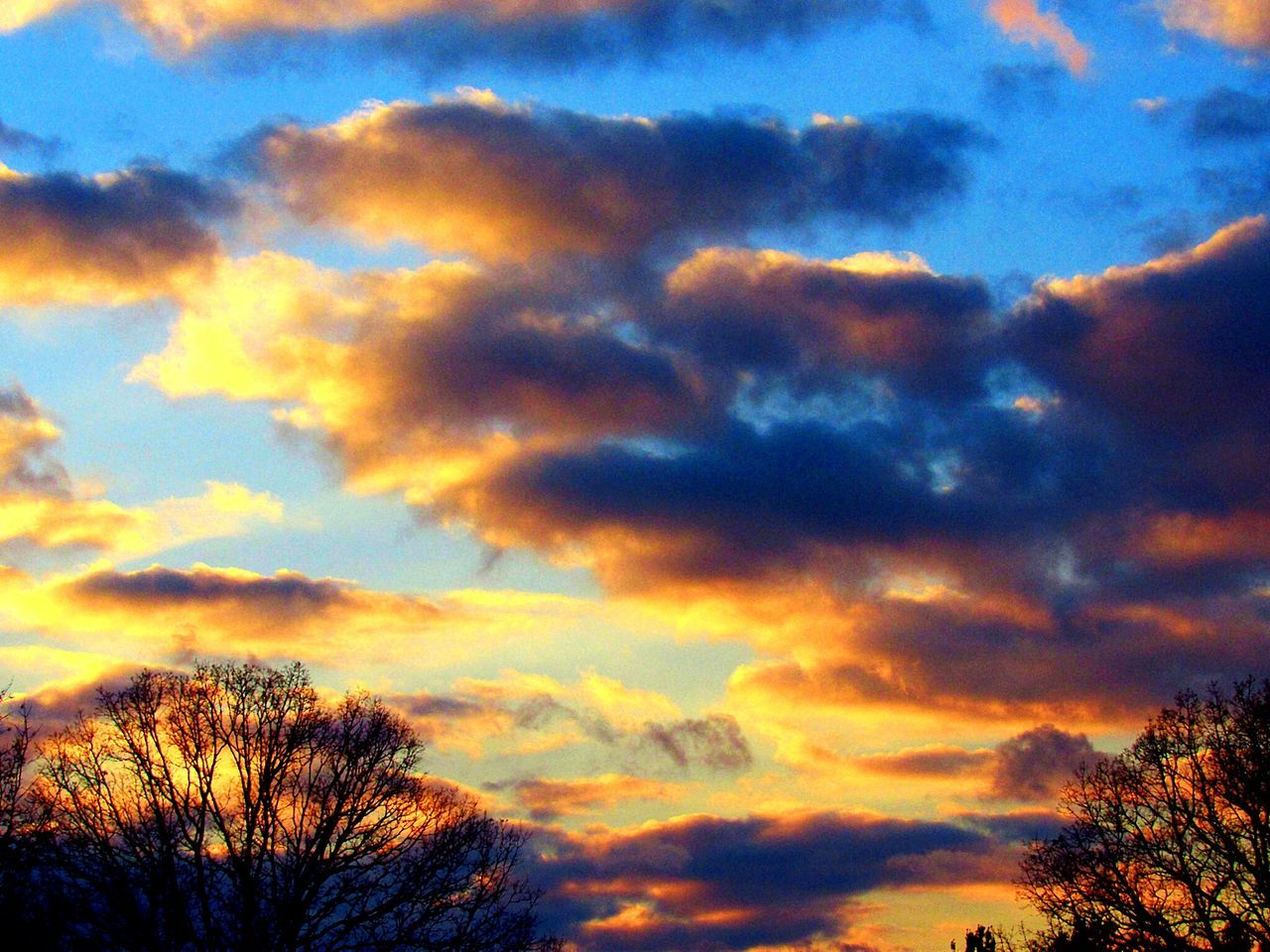 sky, cloud - sky, beauty in nature, silhouette, nature, scenics, low angle view, tranquility, sunset, tree, tranquil scene, dramatic sky, outdoors, no people, sky only, day, bare tree, multi colored