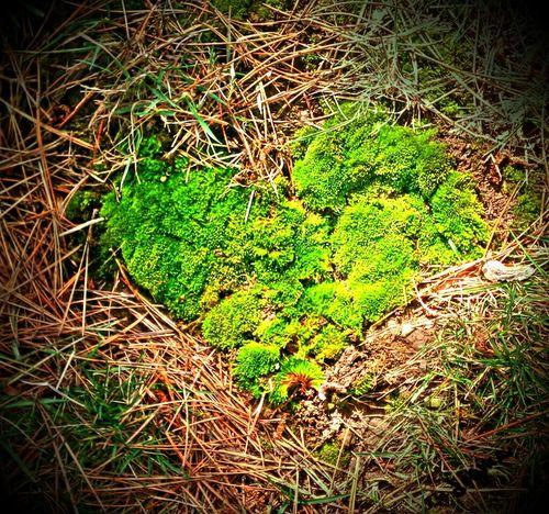 Strong Moss