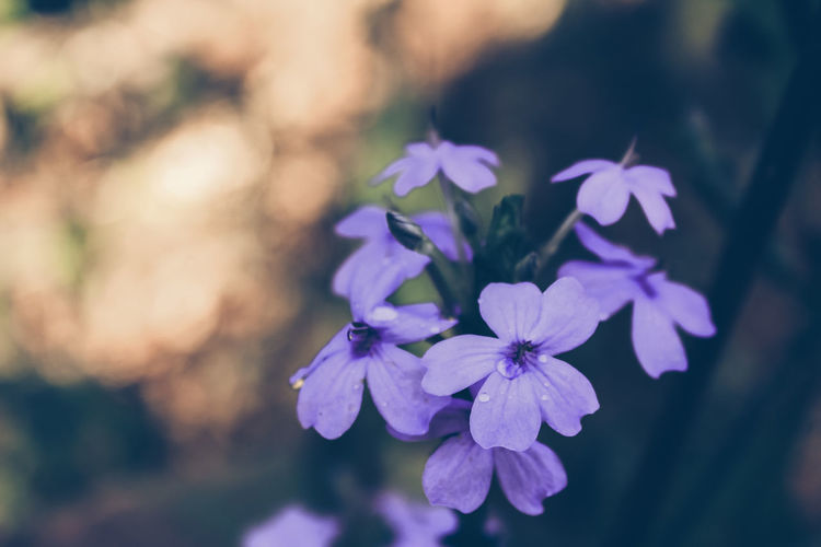 Flower Flower Head Flowering Plant Fragility Vulnerability  Beauty In Nature Plant Growth Freshness Petal Close-up Focus On Foreground Inflorescence No People Purple Nature Day Selective Focus Outdoors Violet Delicate Jungle Forest Vegetation Moist