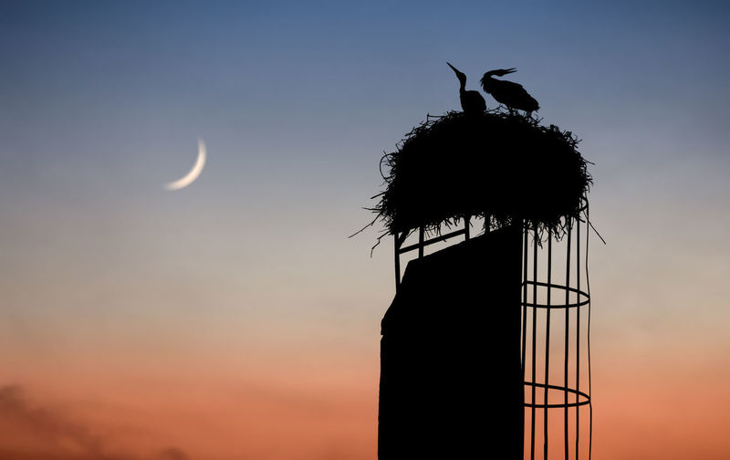 Low angle view of silhouette storks on nest against sky