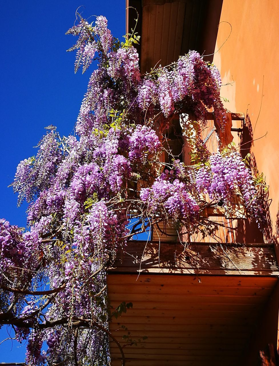 flower, purple, fragility, freshness, wisteria, growth, blossom, low angle view, tree, nature, no people, beauty in nature, springtime, day, built structure, branch, outdoors, pink color, building exterior, lilac, sunlight, blooming, architecture, flower head
