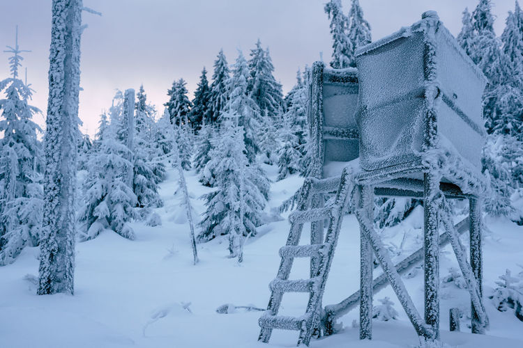 Have a seat Blue Cold Temperature Day Forest Frozen Have A Seat Ice Landscape Mountain Nature No People Outdoors Sky Snow Snow Covered Top Of The Mountains Tree Winter Winter Shades Of Winter