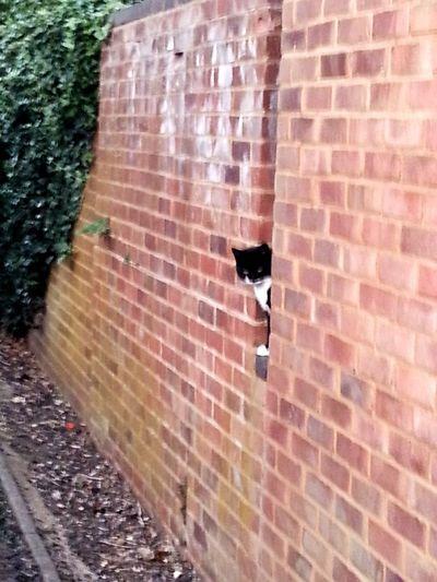 Wall, cat,