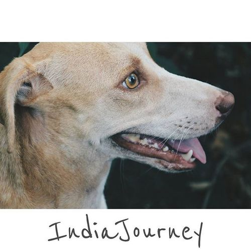 Life is better with a dog Location - Naneghat, Pune, India IndiaJourney Mansbestfriend