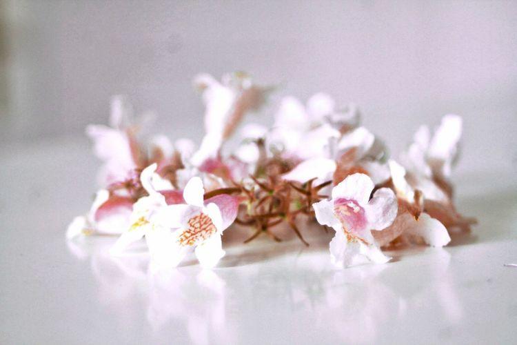 Flower rosè white filigran