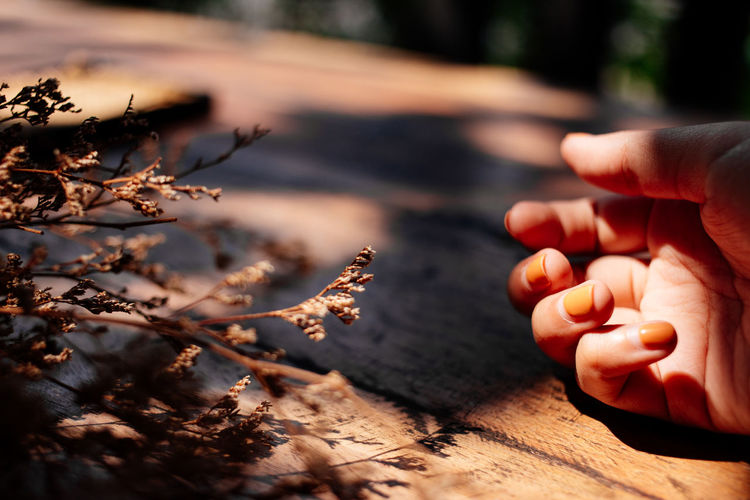 Cropped hand of woman by dead plants on wooden table