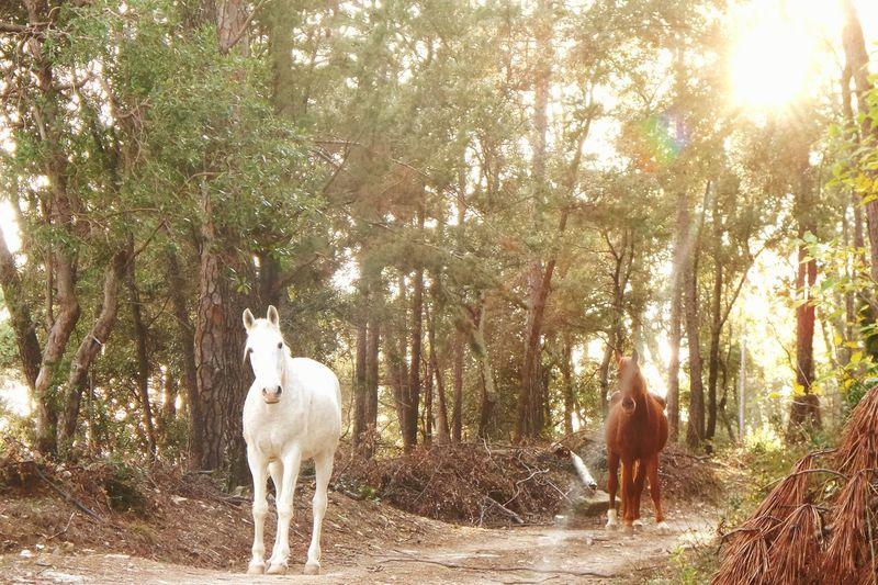 Horse Horses