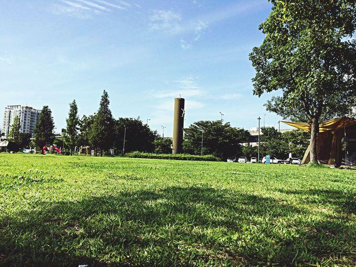 Natural Beauty Sunny Day Natural Urban Nature 뚝섬유원지 데이트?