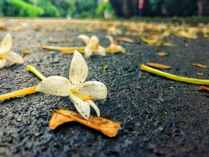 Flower Street White Road Pune Streets Morning Time Mobile Photography Moto MotorolaG4