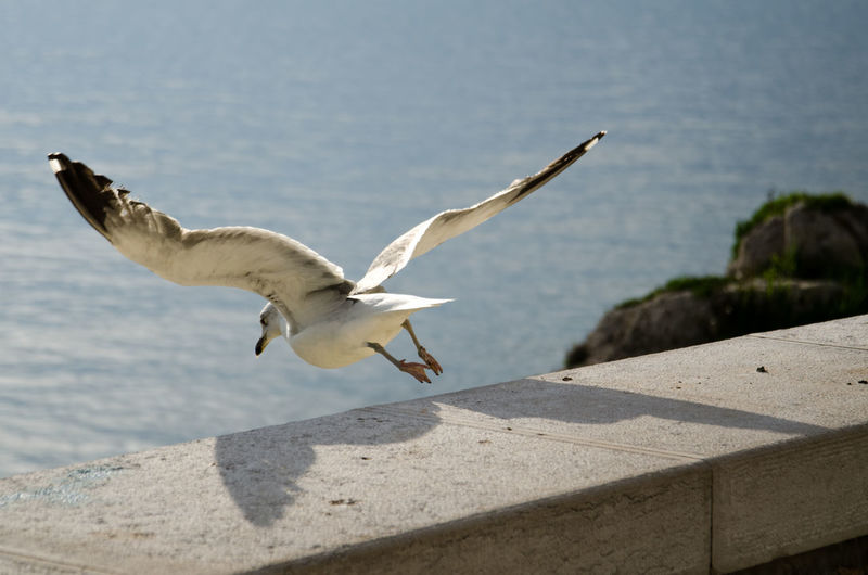 Animal Themes Beauty In Nature Bird Day Flying Focus On Foreground Mid-air Nature No People Outdoors Sea Bird Seagull Sky Spread Wings Wildlife