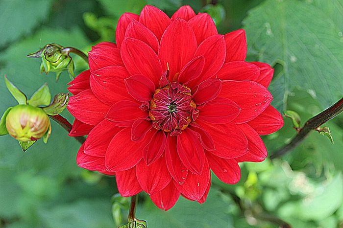 Dahlia Flowerforfriends Floralperfection Noedit EyeEm Best Shots