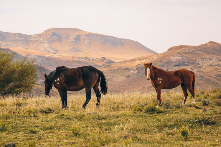 Horses standing on field against mountains