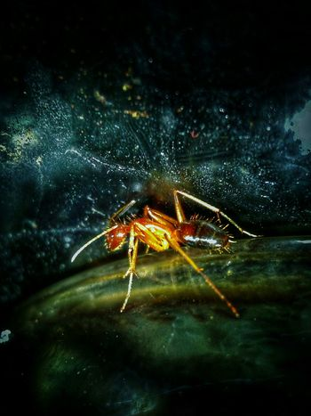 Animal Themes One Animal Animals In The Wild Close-up Insect Nature Animal Wildlife Spider No People Outdoors Night Jumping Spider Ants Close Up Maximum Closeness Ant Photography