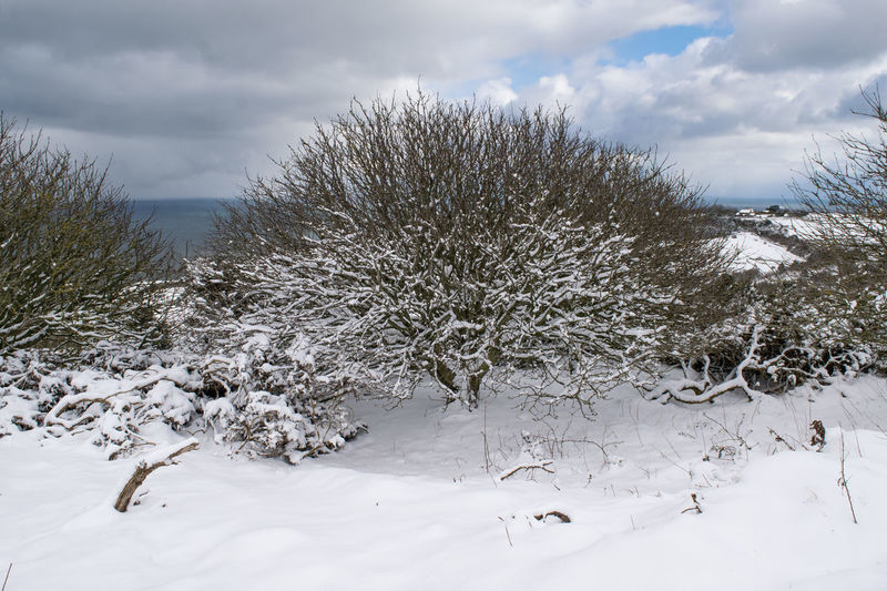 Beast from the East, Ravenscar, North Yorkshire North Yorkshire Robinhoods Bay Scarborough WeatherFront Whitby Bare Tree Beauty In Nature Cloud - Sky Cold Temperature Landscape Nature Outdoors Ravenscar Scenics Seaside Seaview Tranquil Scene Tranquility Tree White Color Winter