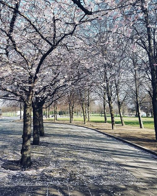 Wandering in the Glasgow green 🌸🌸🌸 VSCO Vscocam Picoftheday Instaoftheday Ig_Scotland IgersScotland Livinginscotland Lifeinscotland Instascotland Insta_Scotland VisitScotland Explorescotland Vscotland Glasgow  Instaglasgow Ig_glasgow Igersscot Flower Spring Glasgowgreen