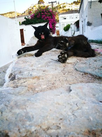 GREECE ♥♥ Greece Islands Greece Island Sea Pets Hidra Vacation Time Domestic Animals One Animal Day Outdoors Funny Chat Kitty Funny Chat Ýdra, Greece Ydra